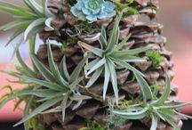 pigna con piante volanti
