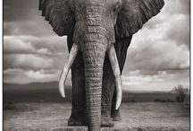 everything elephant