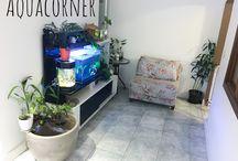 Aquacorner / Aquacanto/ Aquaplantismo
