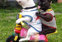Cani Divertenti