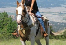 Elk Mountain Ranch, Colorado / High and remote, surrounded by National Forest. Weekly vacation package. Horseback riding, rafting, trapshooting, van trip to Aspen and much more. http://www.ranchseeker.com/index.cfm/pg/listing_details/id/97/frompopup/0