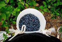 Blueberries galore / by Rachael Driscoll Weinhold