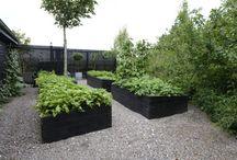 trädgård - köksträdgård