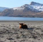 Mull / by claire colville