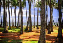 Home Sweet Home! / Hawaii