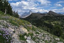Targhee Summer Trails / Join adventures of all kinds in the Teton Mountains.  Grand Targhee Resort is your gateway to wilderness and adventure, with chairlift access to the Caribou-Targhee National Forest and the Jedediah Smith Wilderness just steps off of the Dreamcatcher chairlift.
