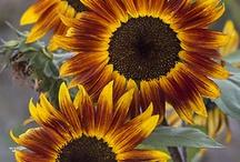 flowers/gardening / by Shirley Van Bussum