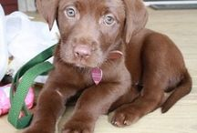 Jess's next puppy <3