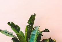 T R O P I C A N A / A glimpse into all things tropical.