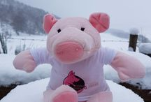 This Little Piggy Loves Photos