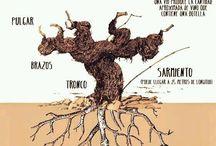 Vinos y vitivinicultura