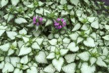 450 Plants