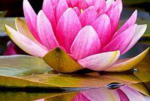flores de agua