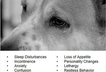 Caring For Your Old Dog / Older dogs have their own special needs. Get the info. you need to keep your senior dog happy and healthy.