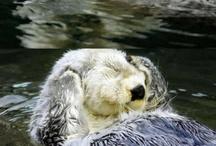 Otter ♥
