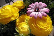 Fleurs / mes balconnières