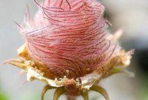Bondens Hage - spesielle blomster