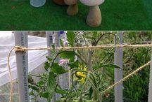 Garden Grow / by Maggie Antonelli-Ranney