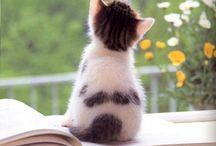 Katt  - svart & hvit
