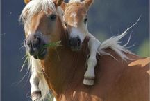 baby horses and their moms