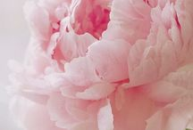 ✿Lovely Flowers✿