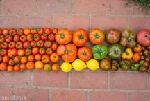 Late Bloomer Harvests