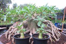 Plants / Some plants duh !