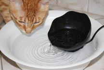 Paixão Pet e DIY