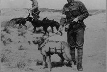 War dogs !