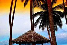 Tropical Photos