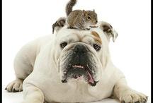 ANIMALS I LOVE / DOGS TYPES I LOVE / by Iesha Lockett