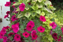 Bahçe Çiçekçiliği