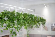 interior - plants