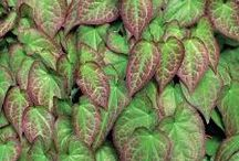 Leny plants