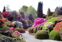 Flower Gardens / by Sharon Bessert