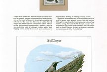 Songbirds on Stamps