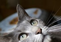 Cat...titude