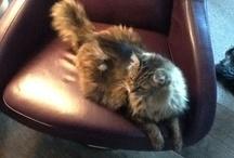 Pets / Those four legged fur babies