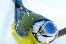 Bird's.