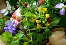 vad növény saláta