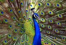 Beautiful Birds / by Margie Lustick