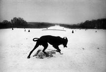 Photodog / by Raquel Cerezo