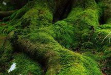 Moss/Sammal matto