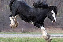 big horses playing