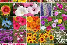 2018 Wildflower Garden