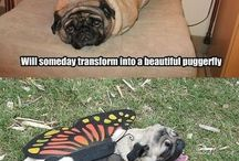 All things Pugs / by Carmen Johnston