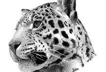 Jaguarhead