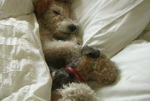 Sleepy & Cuddly Cuties #Pets / by PetGlad