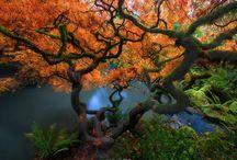 Рефы деревьев (фото)