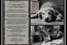 pet passing poem